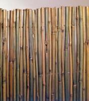 Καλαμωτή Bamboo