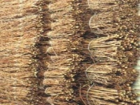 Θάμνος λυγαριάς